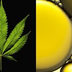 Noble hemp CBD Oil